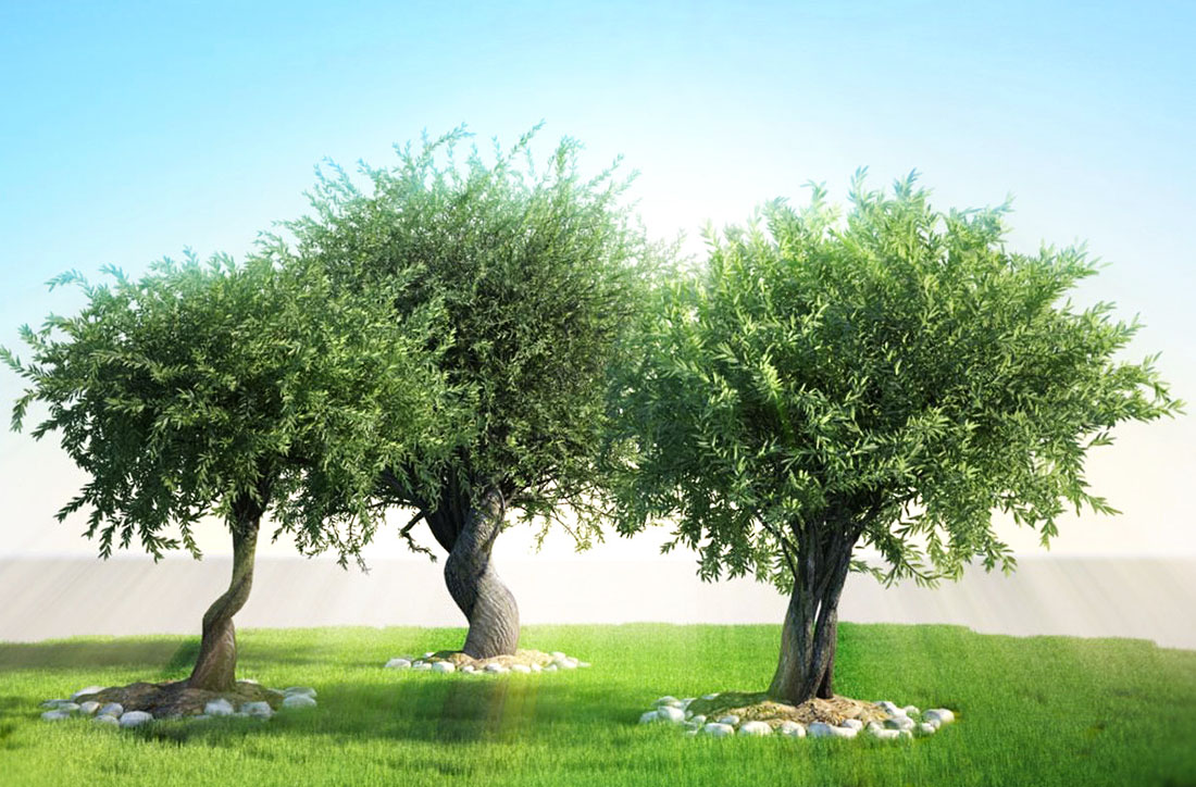 3d olive tree for maya